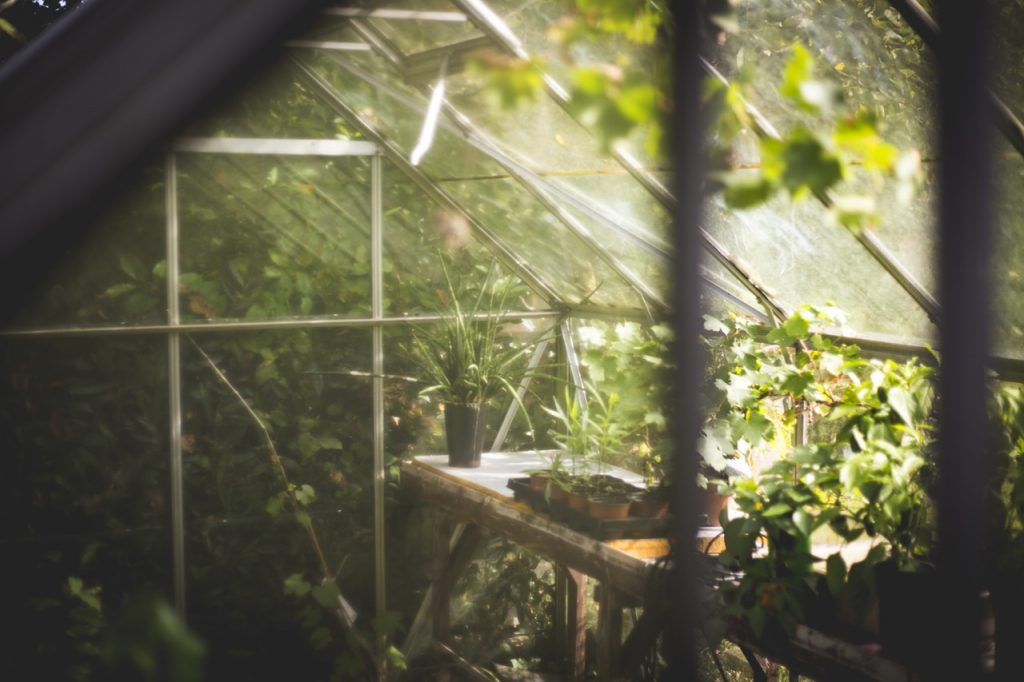 greenhouse summer garden tips